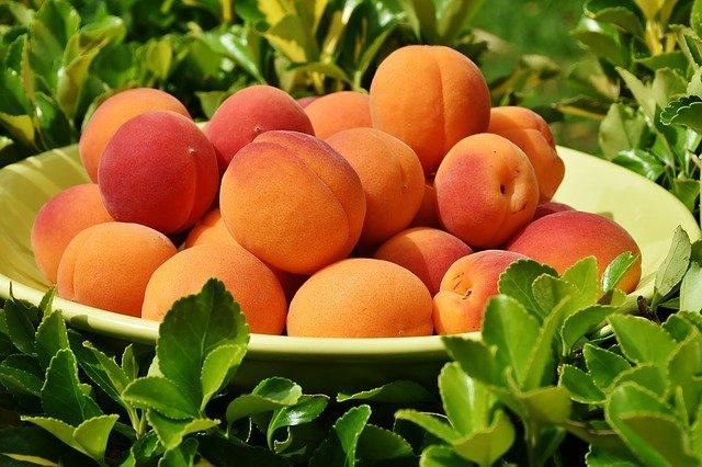 meruňky na míse