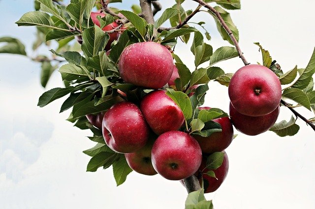 Dejte si jablko